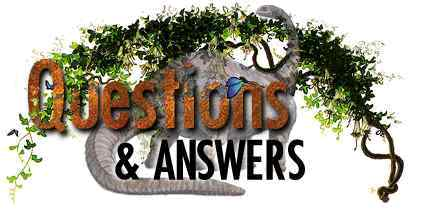 Dino Questions and Answers