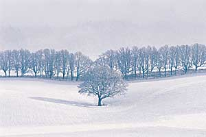 Winter scene. Photo copyrighted.