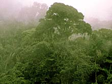 Rainforest landscape. Photo copyrighted.