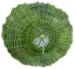 Spider Web. Illustration copyrighted.