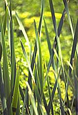 Plants (photo copyrighted) (Courtesy of Films for Christ)