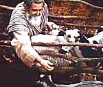 Noah and the Animals. Copyrighted by Films for Christ. Scene from the motion picture, The World That Perished