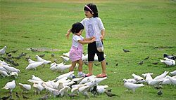 Girls feeding pigeons. Photo copyrighted. Courtesy of Films for Christ.