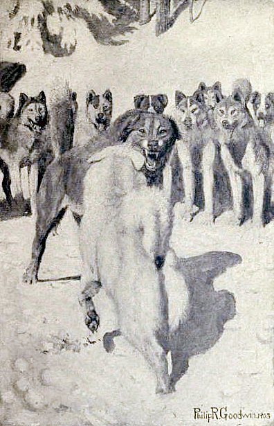 Illustration by Philip R. Goodwin in Jack London's Call of the Wild